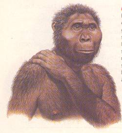 the First Hominids